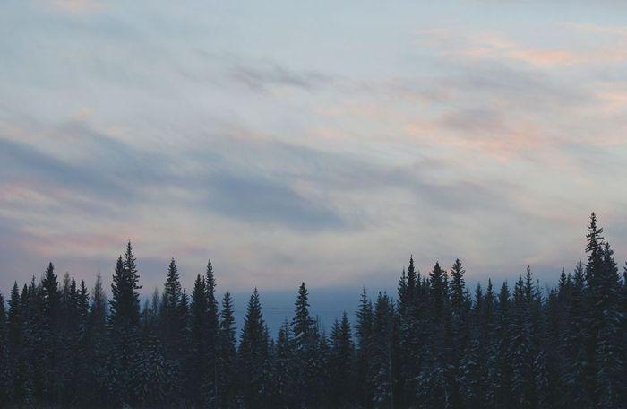 Winteress